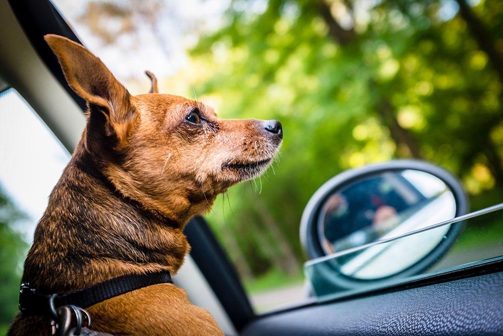 La nueva función de Uber alerta a los conductores de que las mascotas se unirán al viaje